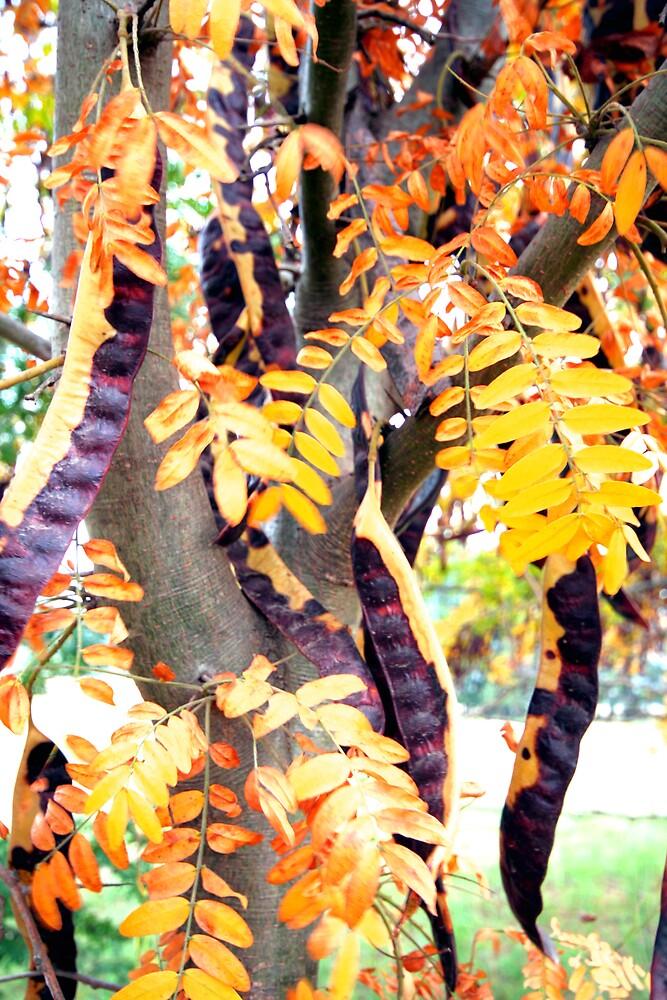 Bean Tree by Larry149