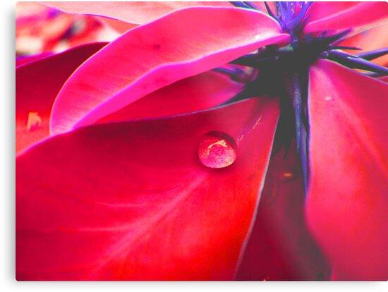 tear of the leaf by flowerindattic