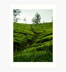 Tea Estates Art Print