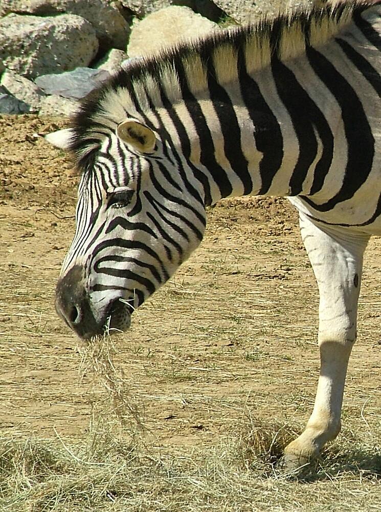 Zebra  by BizziLizzy
