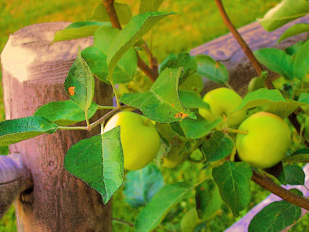 Green Apples by Gene Cyr