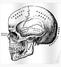 Anatomie-Schädel Poster