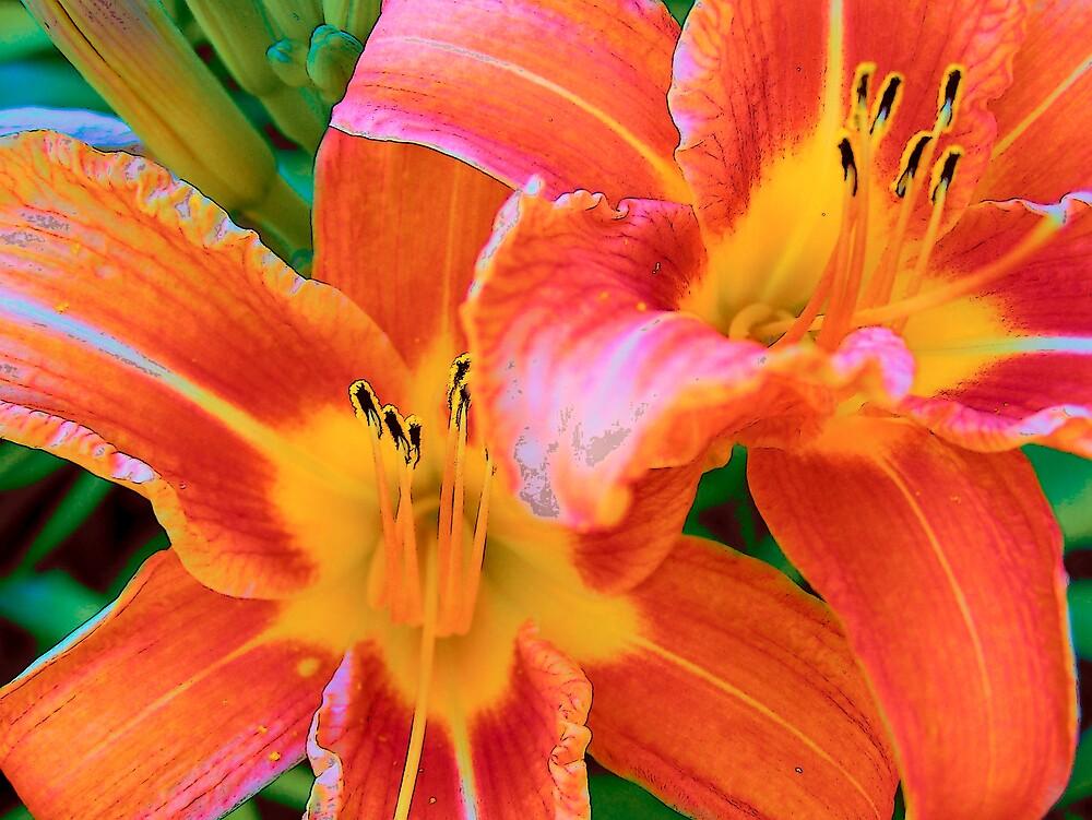 Orange Tiger Lily 2 by Gene Cyr