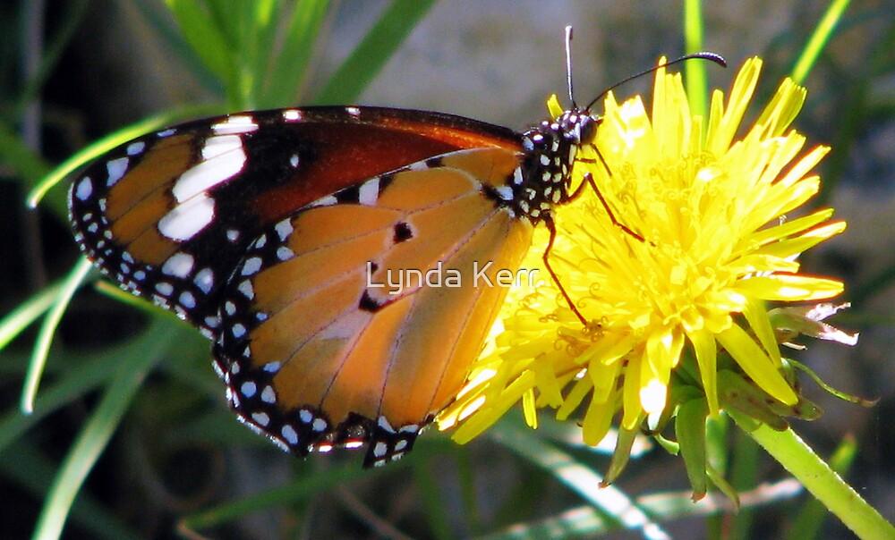 Yellow Butter Flutter by Lynda Kerr