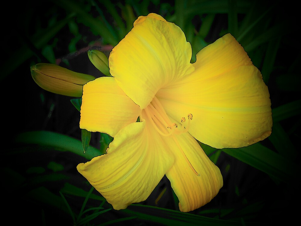 Yellow Lily 2 by Gene Cyr