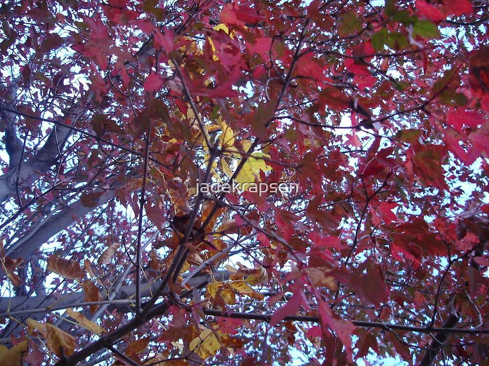 Beneath One Happy Maple by jadekrapsen