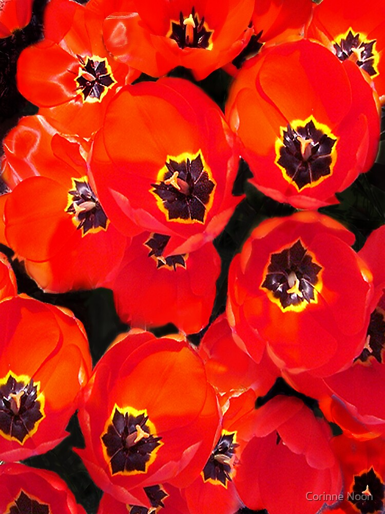 Many Tulips by Corinne Noon