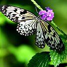 Nectar at Breakfast by Daniela Weil