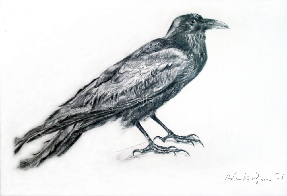 Old Raven by aila