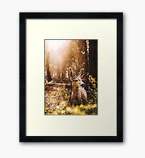 a deer in the yosemite national park Framed Print