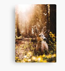 a deer in the yosemite national park Canvas Print