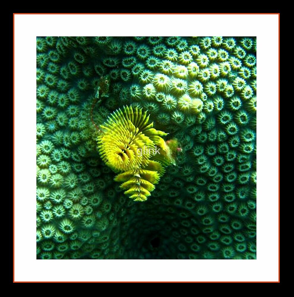 Brain Coral Feeding by glink