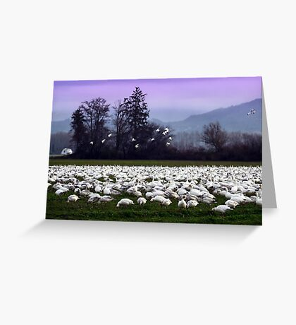 flight of the snow geese Greeting Card