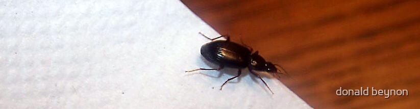 bug by donald beynon