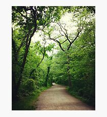 Forest Highway Photographic Print