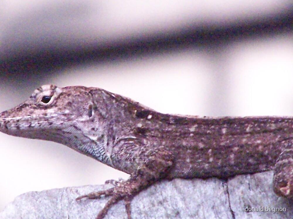 lizard by donald beynon