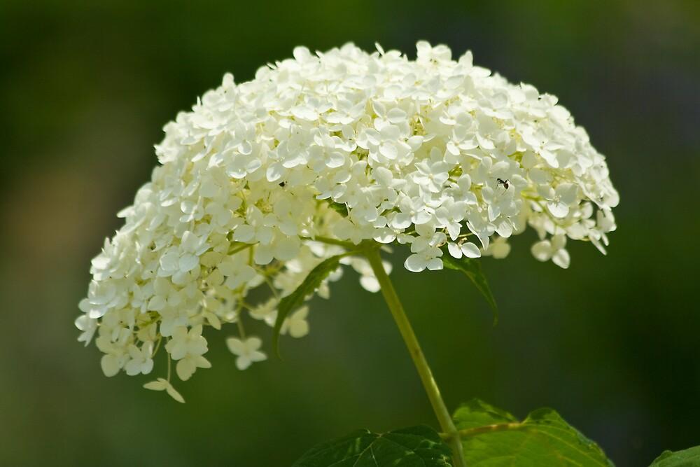Flower of beauty by greyrose