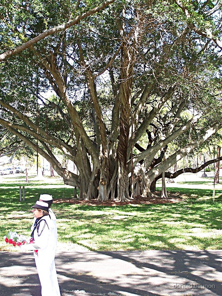 dads memorial in florida,this is the tree of hope. by donald beynon