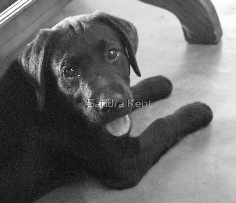 Another one of my pup !! by Sandra Kent