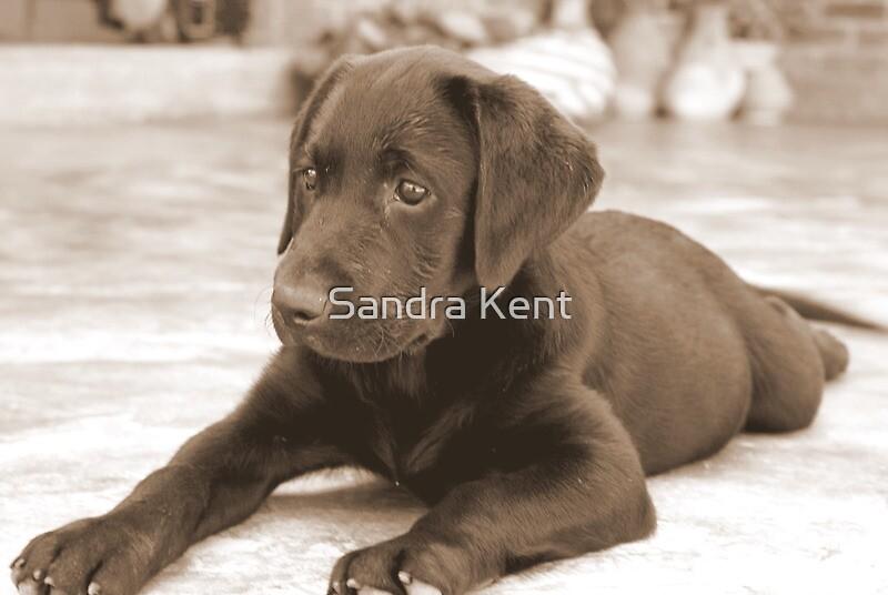 Pups again !! by Sandra Kent
