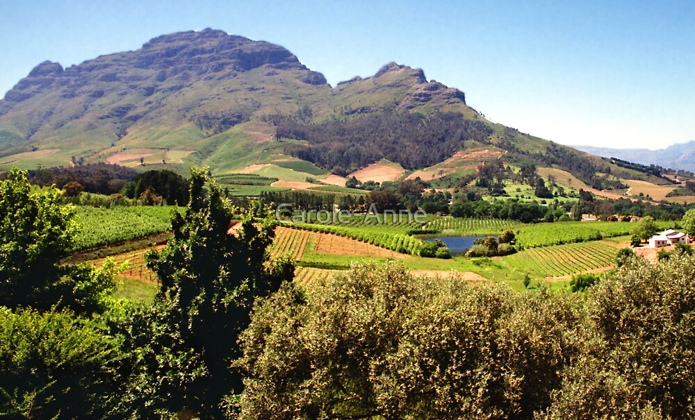 Stellanbosch, South Africa by Carole-Anne