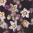 Dainty Little Things by LawsonImages