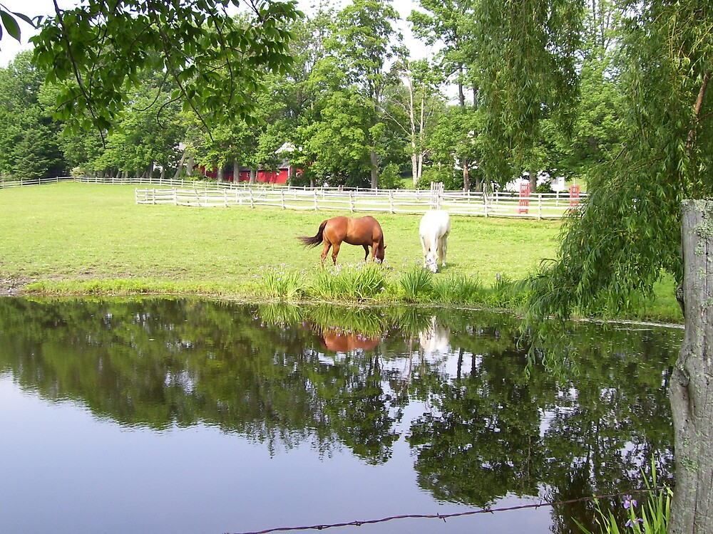 Horses in Berkshires 2 by Christine Frydenborg Dargon