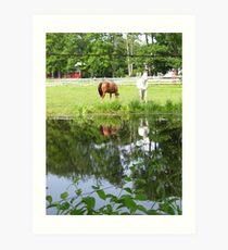 Horses in Berkshires 4 Art Print
