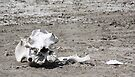 Death in a Dead Lake. The Stark reality of Climate Change, Tanzania by Carole-Anne