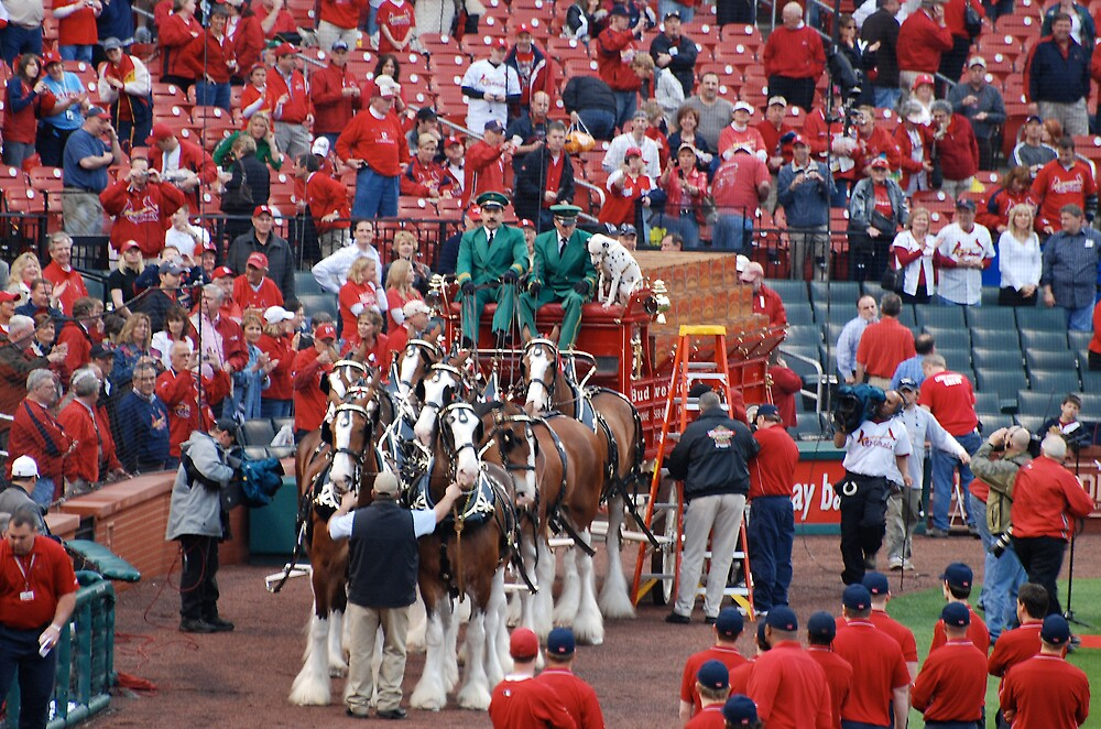 Budweiser Clydesdale Team by Jim Caldwell