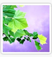 Sycamore Tree Leaves Over Water  Sticker