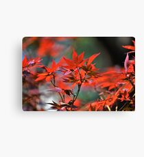 Red Japanese Maple Leaves  Canvas Print