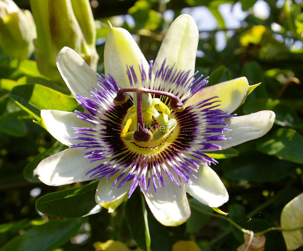 Unusual flower by Nixter