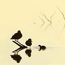 Twigs and ducks at Beeliar Wetlands, Three's a Crowd by nadine henley