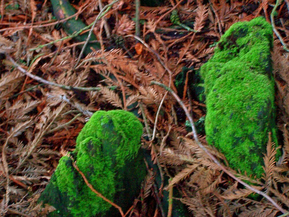 Lichen by Carrie Norberg