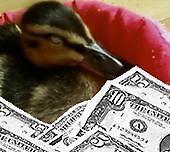 money shot by darren  shaw