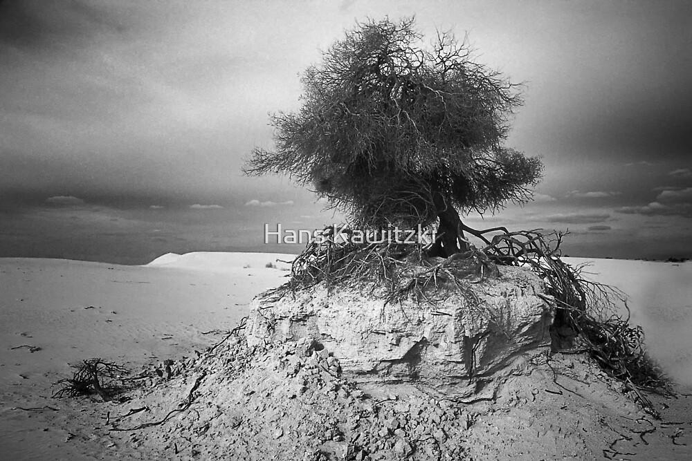 027 Clinging to life - Mono by Hans Kawitzki