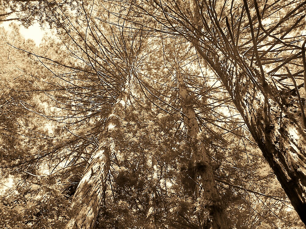 Branches by Carrie Norberg