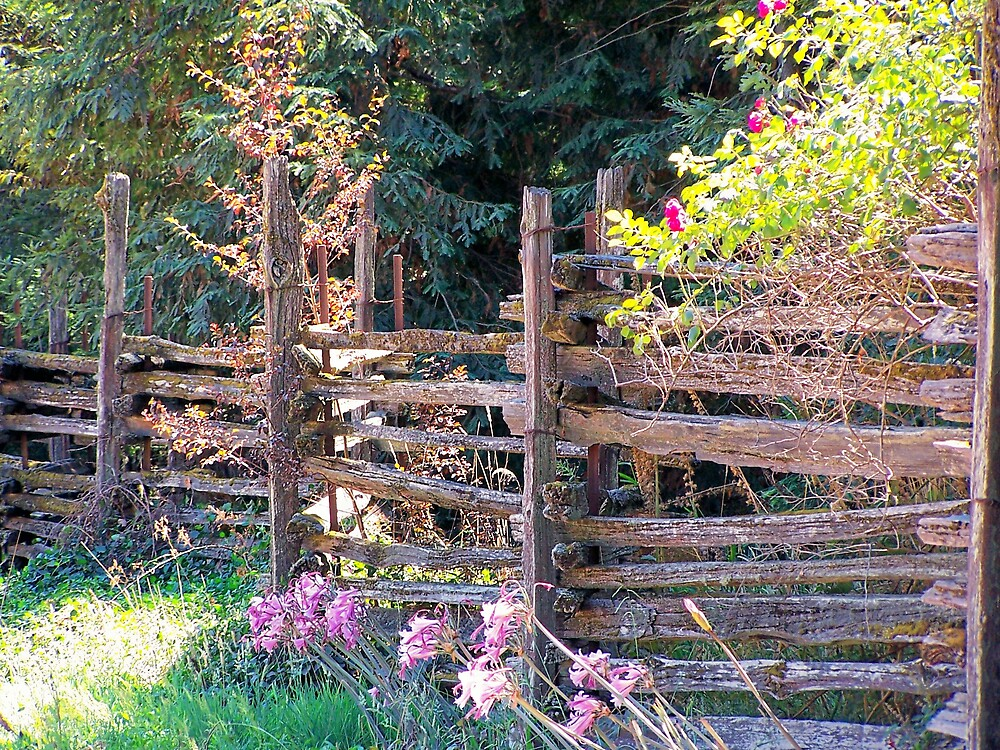 Wooden Fence by Carrie Norberg