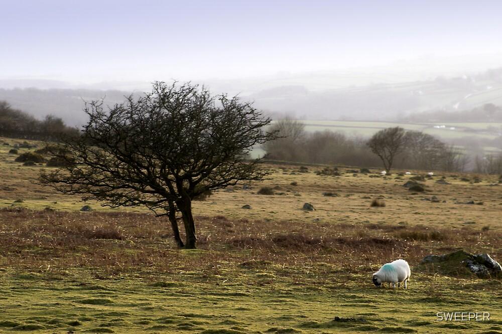 Dartmoor evening by SWEEPER