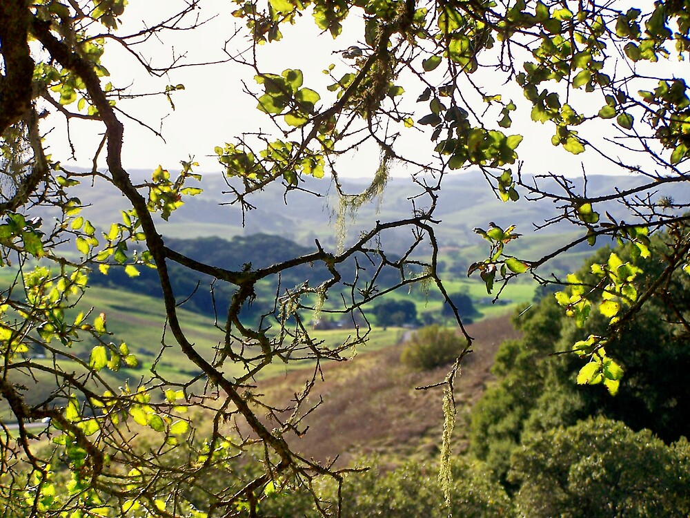 Sonoma County by Carrie Norberg