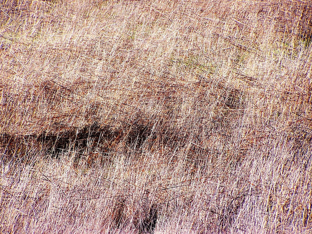 Grasses by Carrie Norberg