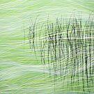 Reeds15 by Tom  Reynen