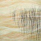 Reeds16 by Tom  Reynen