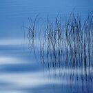 Reeds18 by Tom  Reynen