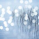Reeds17 by Tom  Reynen