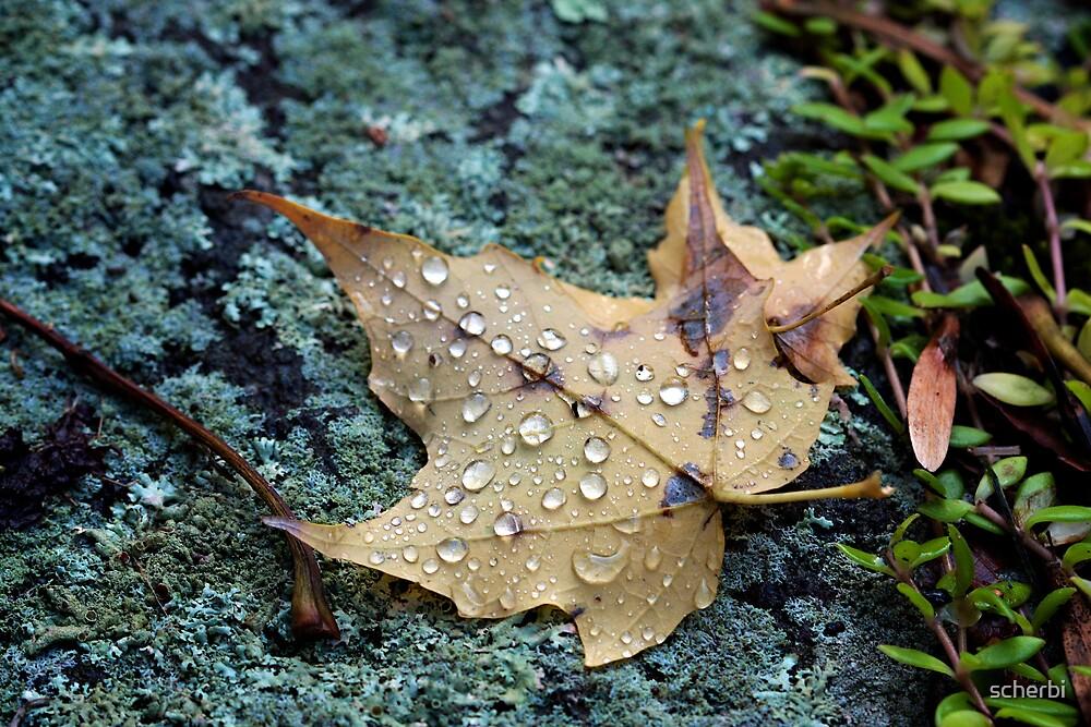 Maple Leaf with Water Drops on Lichen by scherbi