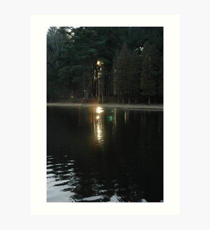 Secret in the Woods ll Art Print