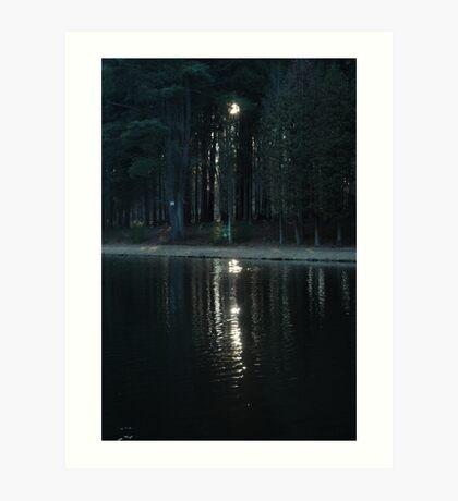 Secret in the Woods lll Art Print