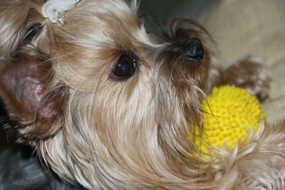 It is MY ball by shadyuk